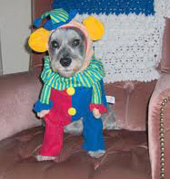 costumed dog
